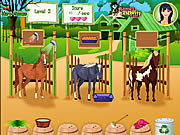 Click to Play Horse Care Apprenticeships